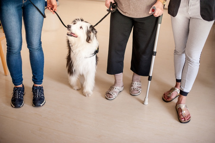 Animal Assisted Therapy Fetches Better Patient Outcomes - BTE